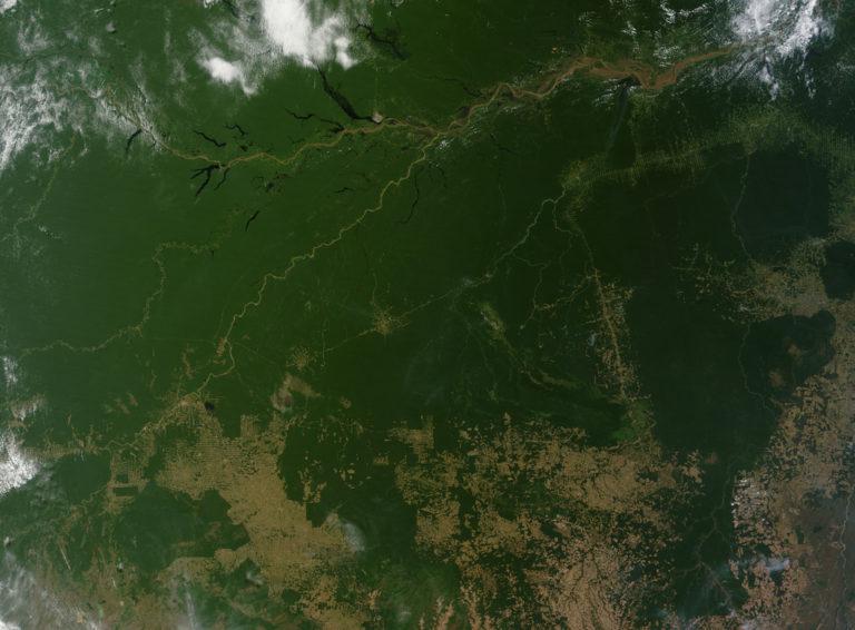 I databáze chrání tropické deštné pralesy